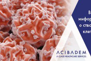 Вся информация о стволовых клетках